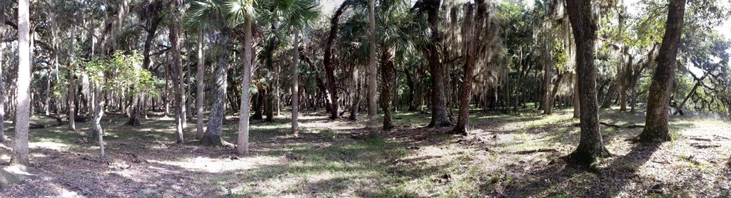 [Forest%2520Panorama%255B6%255D.jpg]
