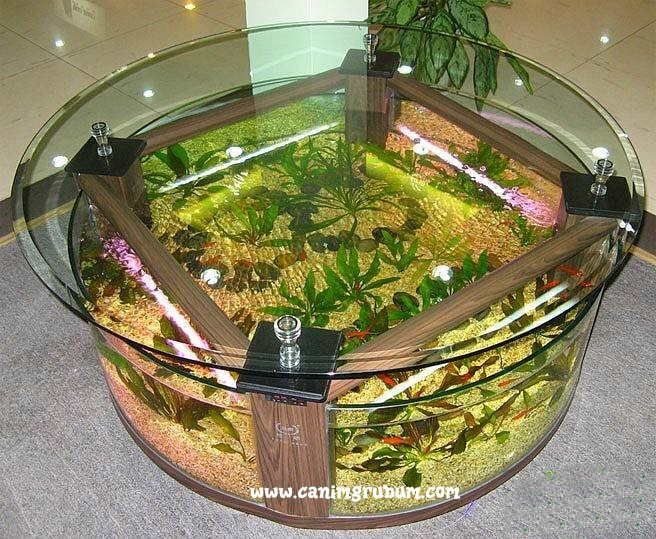 Beautifu Fish Tanks