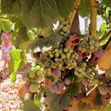 mallorca-wine-express-08.jpg