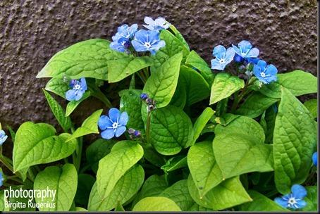 blom_20120412_blue
