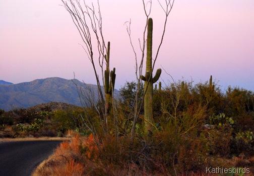 1. Saguaro NP-kab