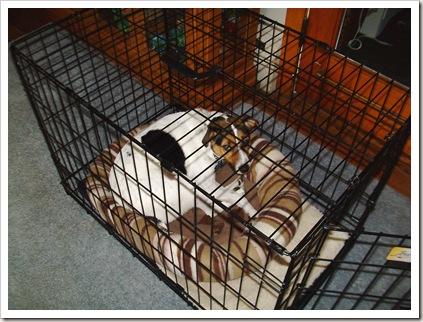 sadie in crate 001