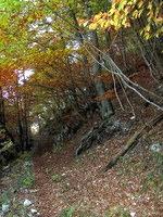 Pot kmalu zavije v gozd