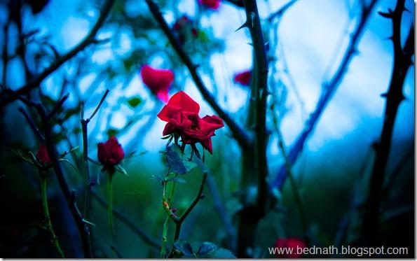 my gdns flowers