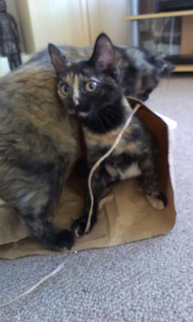 two tortie kittens playing in a paper bag