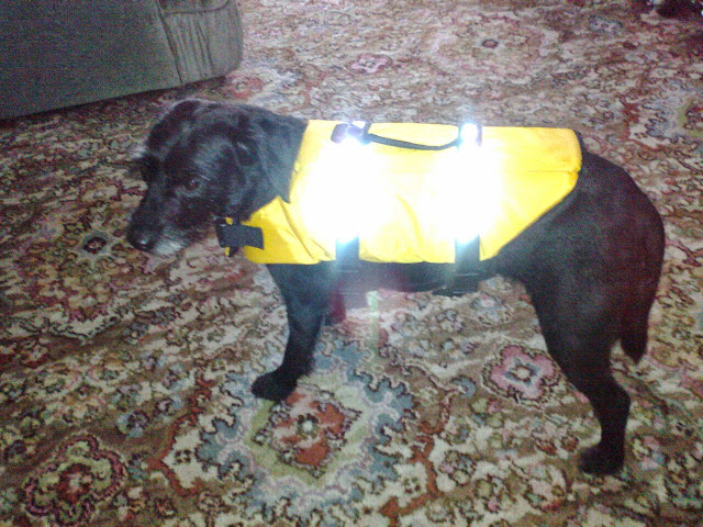 dog life jacket swim swimming safety