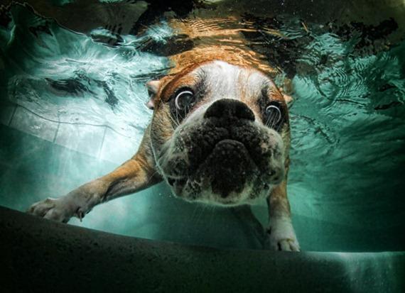 Underwater Dog 011