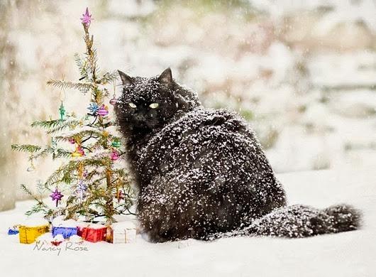 кот-живность-снег-елка-992198