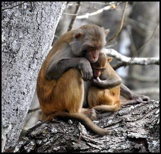 08 - Animals - Monkey 6 - female and baby