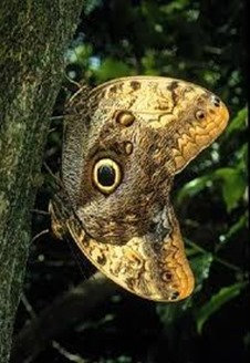 Amazing Pictures of Animals, photo, Nature, exotic, funny, incredibel, Zoo,,Peanut Bug Fulgora laternaria, Alex (21)