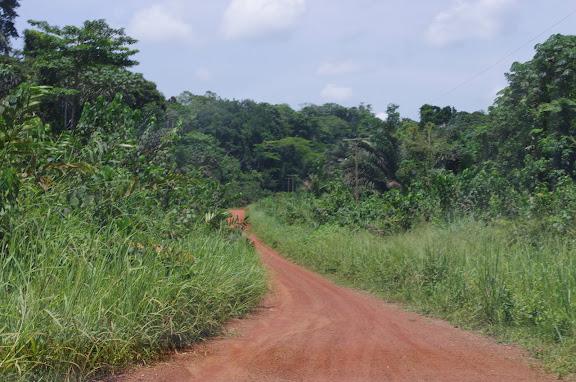 La piste vers Ebogo (Cameroun), 8 avril 2012. Photo : J.-M. Gayman