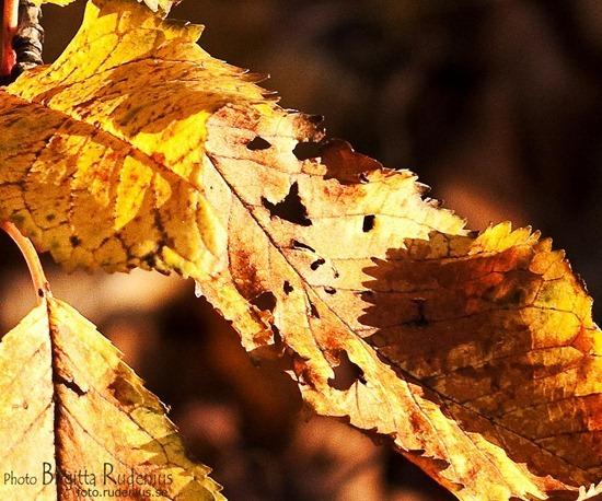 natur_20111111_blad1a