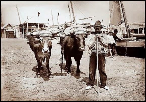 la pesca del bou 1920 las arenas