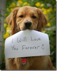 Dog-I will-love-you-forever