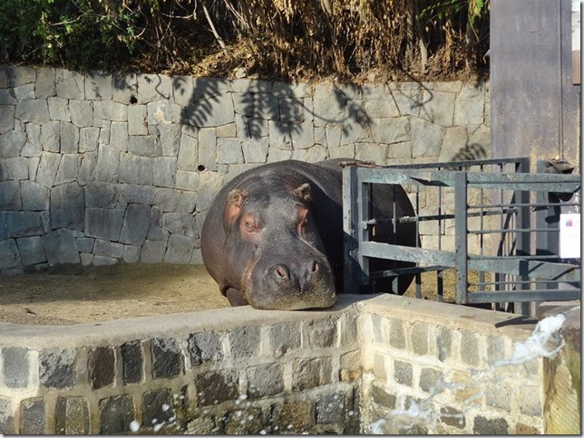 Santiago_Zoo_DSC03617