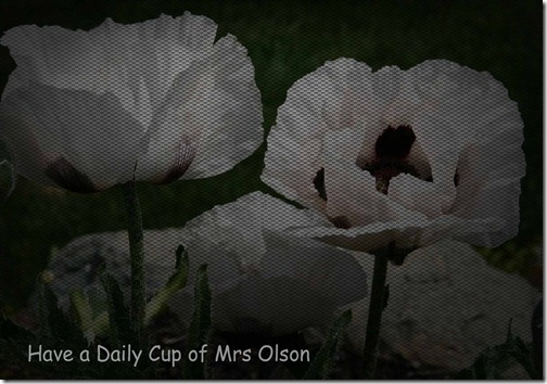 Metal white poppy