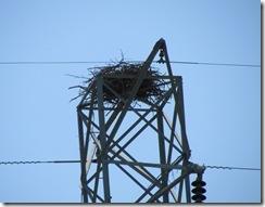 Ospey Nest