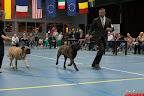 20130510-Bullmastiff-Worldcup-1106.jpg