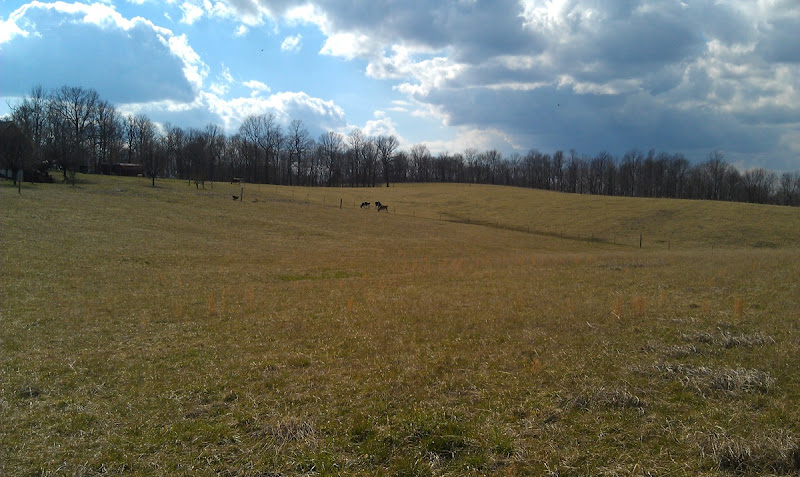 Side pasture1