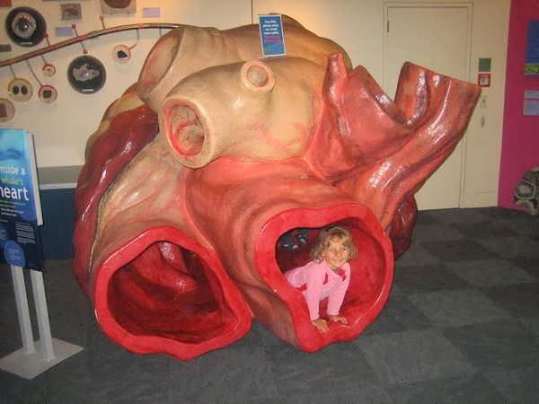 1- O coração da baleia azul