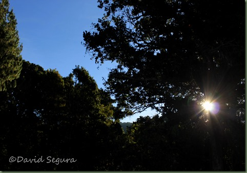 Madre Selva (2)