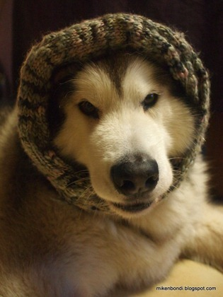 Snood dog (4)