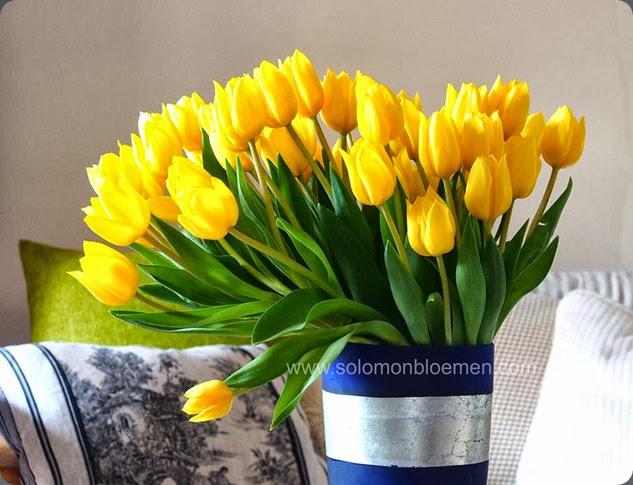 tulip 1044648_10151747920336257_905650270_n solomon bloemen