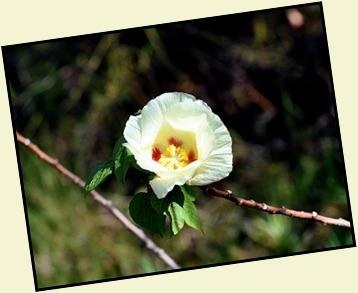 04e - Bay Shore Loop Trail - Pretty Blossom