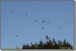 Nant yr Arian D7000  28-03-2012 14-14-011
