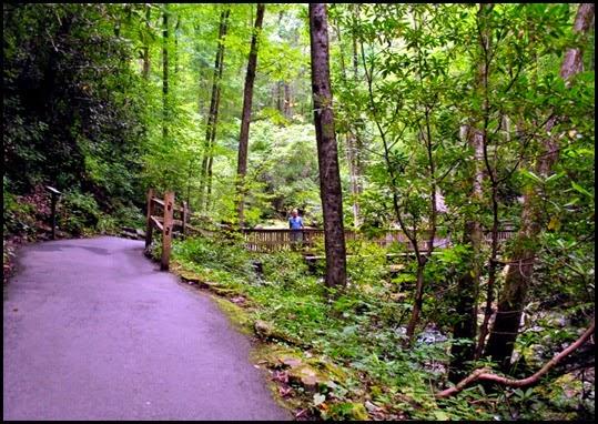 25a - Anna Ruby Falls Trail - Bridge crossing Smith Creek