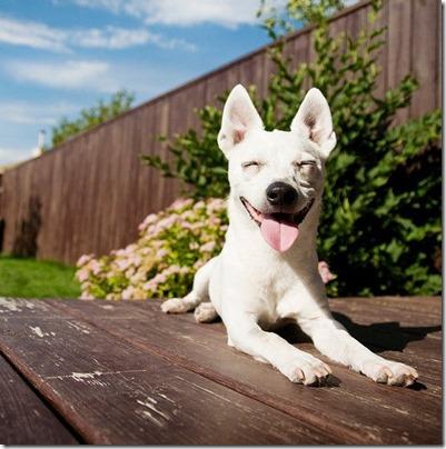 fotos gradiosas de perros capitanpalomo (9)