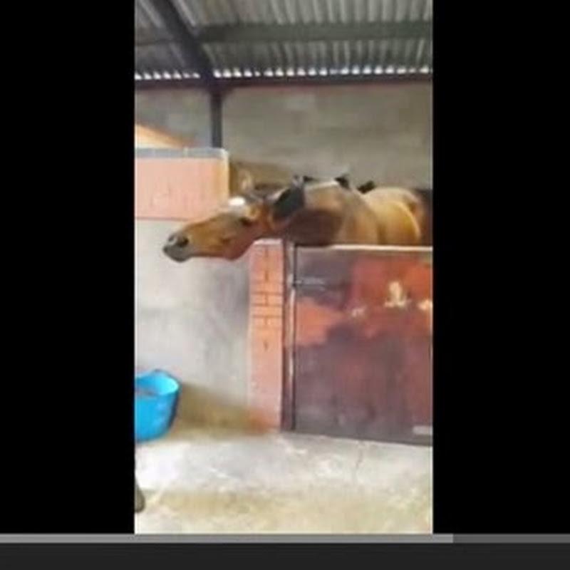 Άλογο ραπάρει
