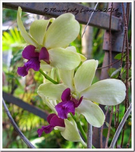 06-30-d-orchid