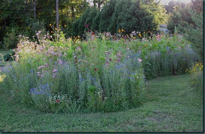 meadow0716 (7)