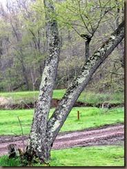 bitrunk tree