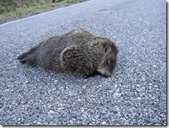 Groundhog gone to final resting place