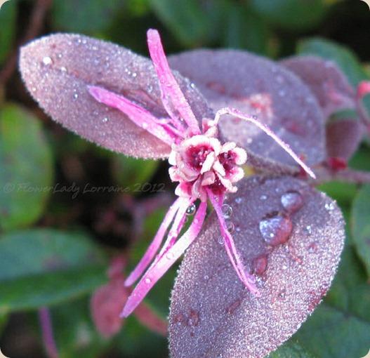 07-06-fringe-flower4