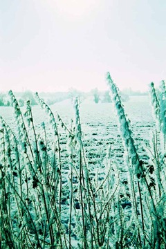 Snowy-Fields-6---XPRO