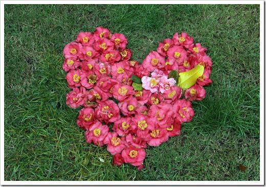120317_Capitol_Park_Camellia-japonica_39