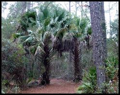 14 - Palms