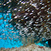 Largespined glassfish - Photo (c) 104623964081378888743, some rights reserved (CC BY-NC-SA)