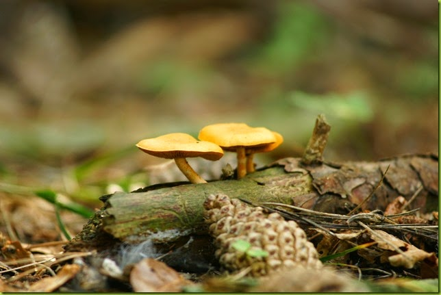 fungi on the forest floor