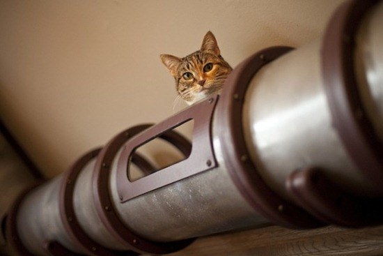 Trânsito de gatos 09