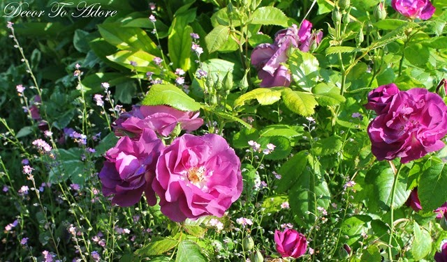 Monet's Garden 010