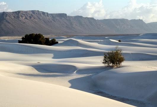 12647128_Socotra_NY2010_91