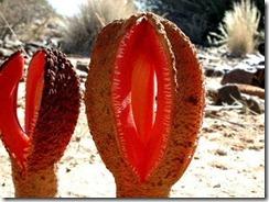 http://tipspetani.blogspot.com/2014/12/tumbuhan-aneh-yang-ada-di-dunia.html
