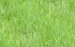grass-natural