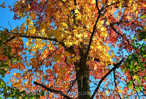 Glória Ishizaka - Outono 2013 - 64