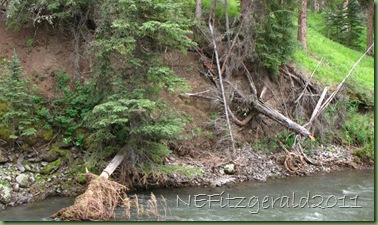 IMG_8230Stream Erosion ExposingMt MazamaAsh
