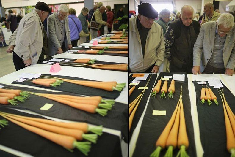 giant-vegetables-10